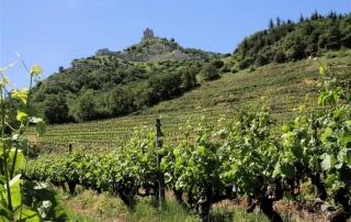 vignes sous crussol